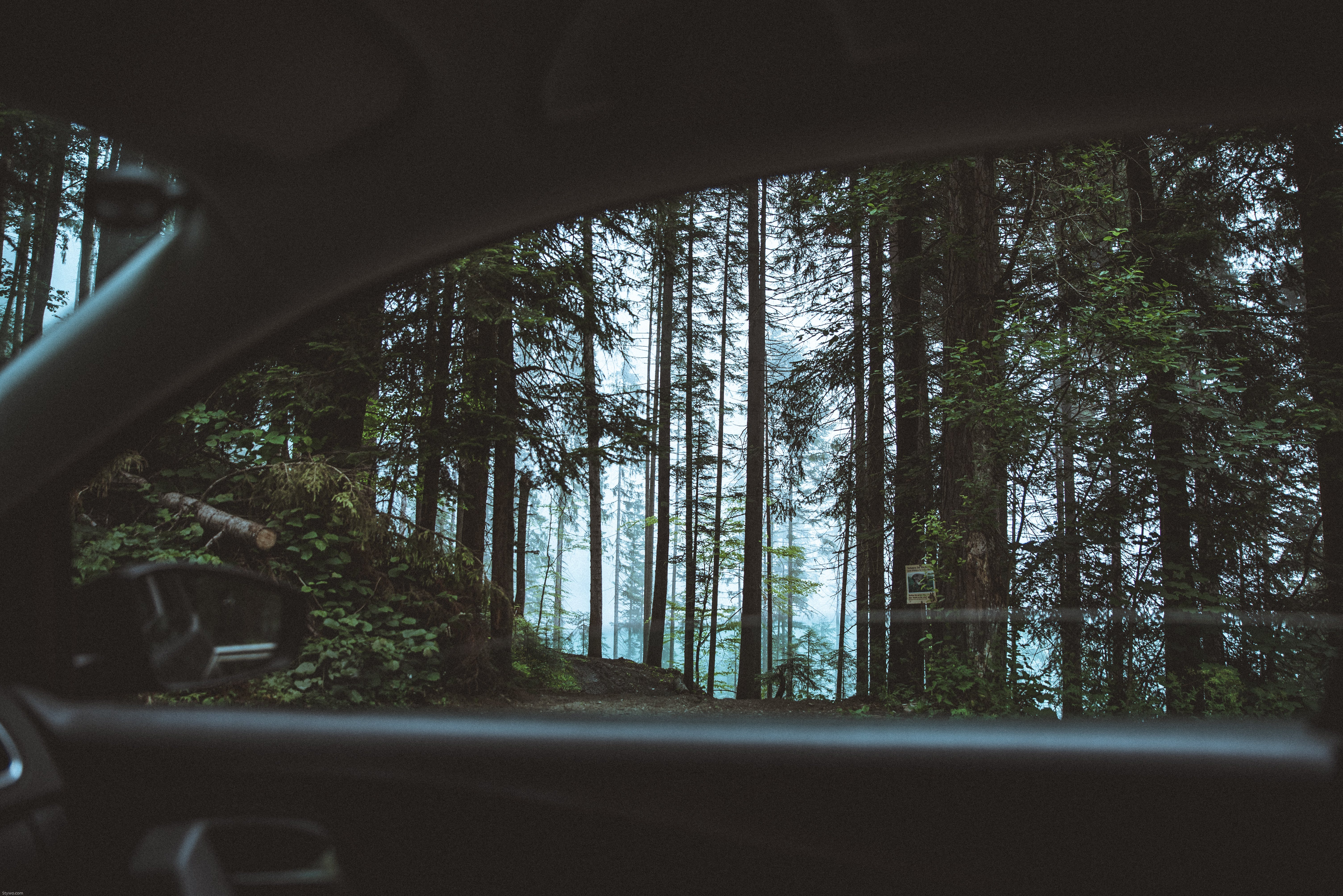 Scenic View of Forest From Car