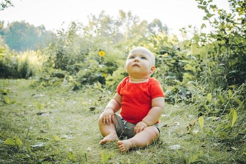 Kostenloses Stock Foto zu baby, feld, junge, kind