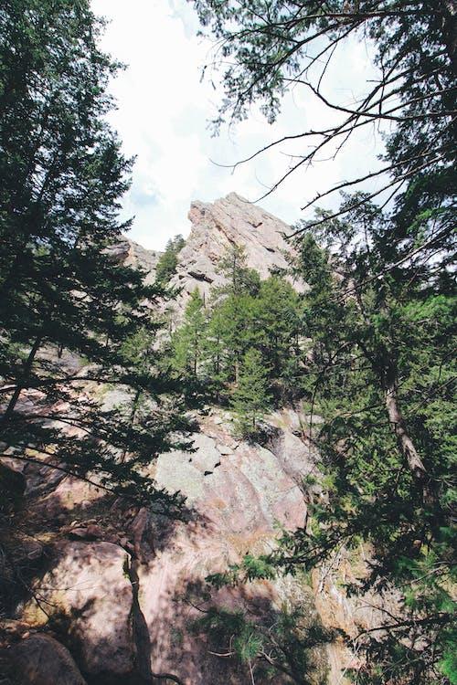 Foto profissional grátis de amantes da natureza, árvore, árvores, escalada