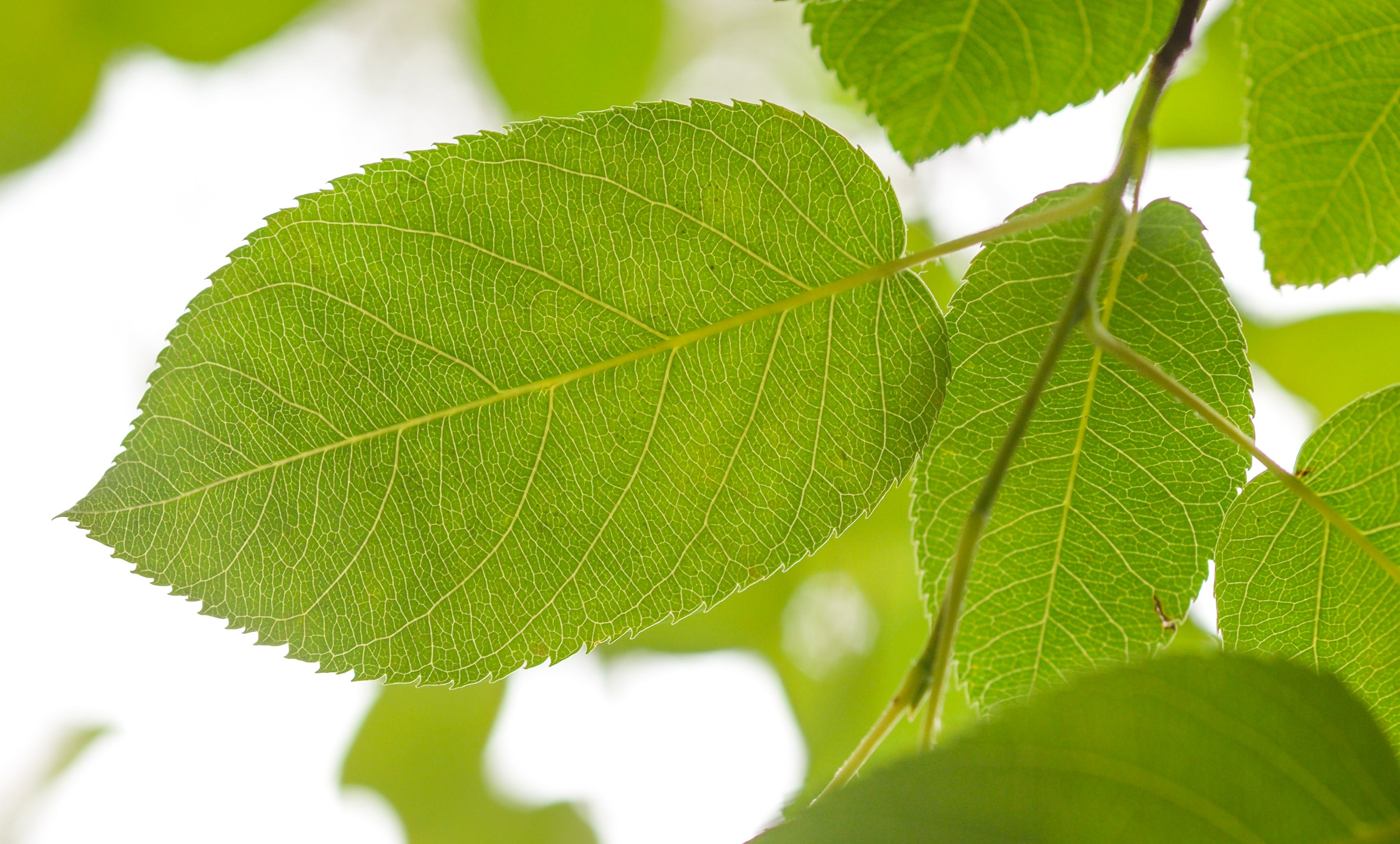 Shallow Focus Photography of Green Leafed Tree