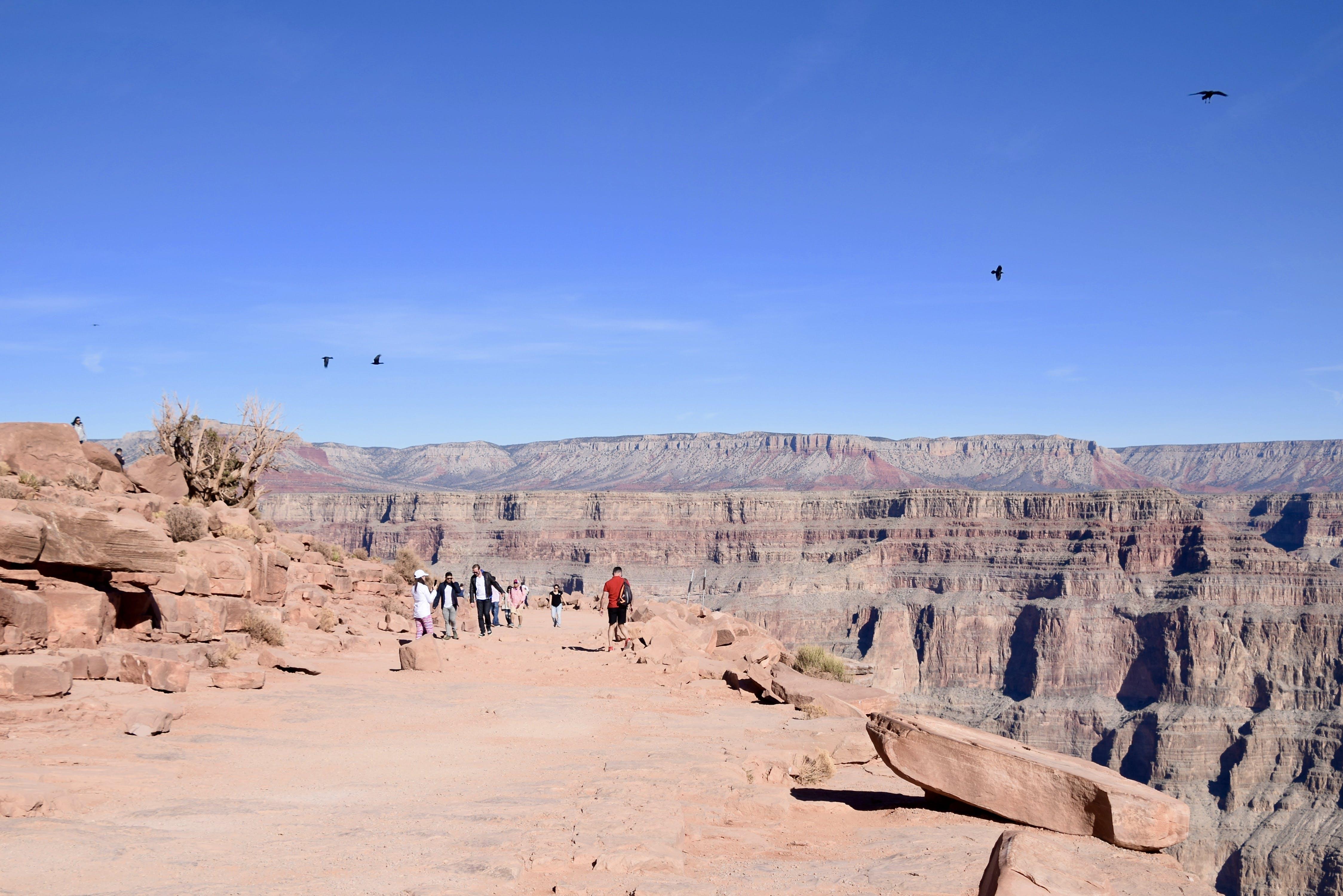 Fotos de stock gratuitas de Arizona, aves voladoras, barranco, cielo