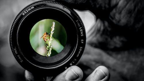 Gratis stockfoto met Adobe Photoshop, bij, bijen, canon