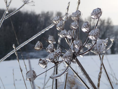 Základová fotografie zdarma na téma kapky, koruna, led, zimní pohádka