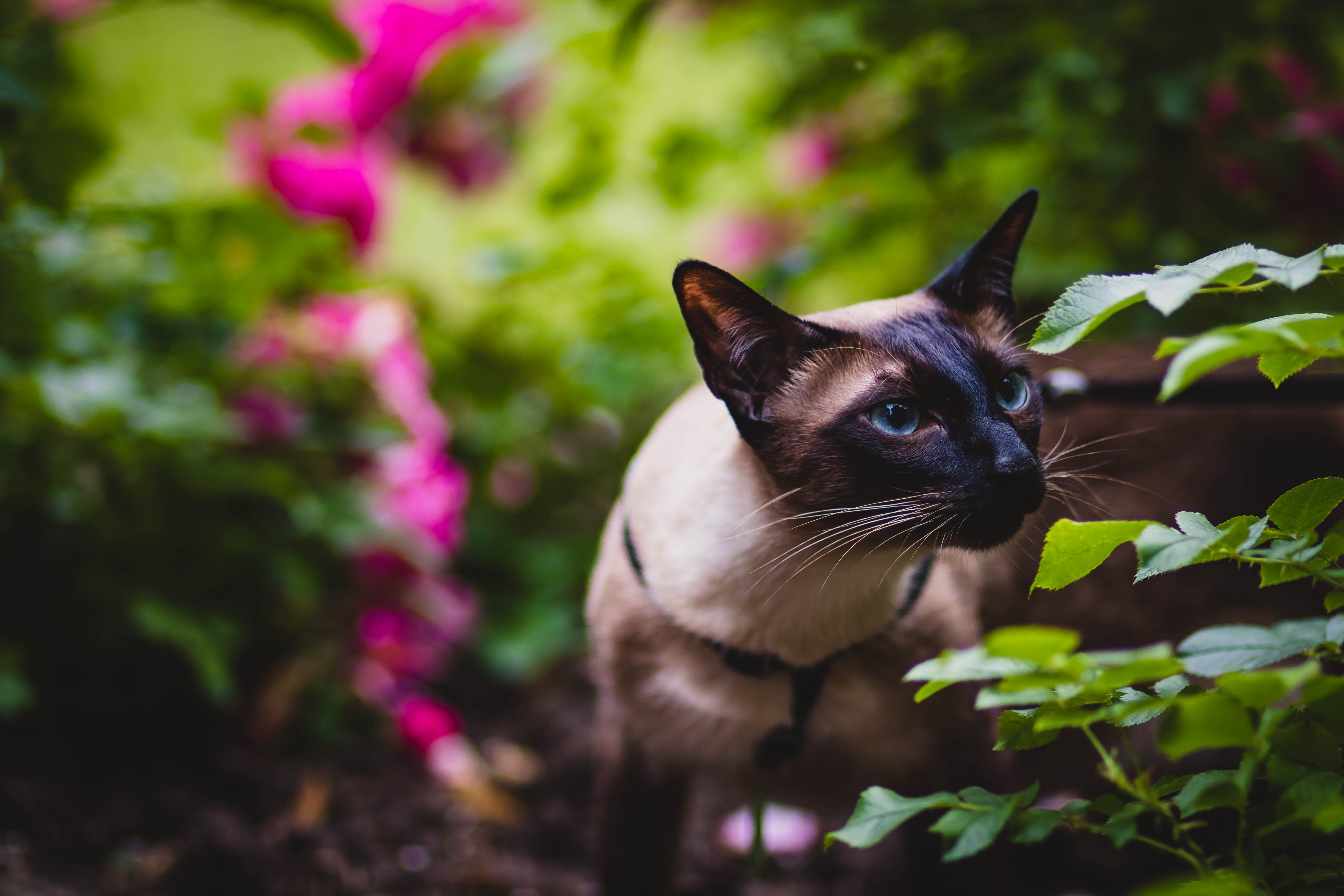 Shallow Focus Photography of Cat Smelling Some Leaves