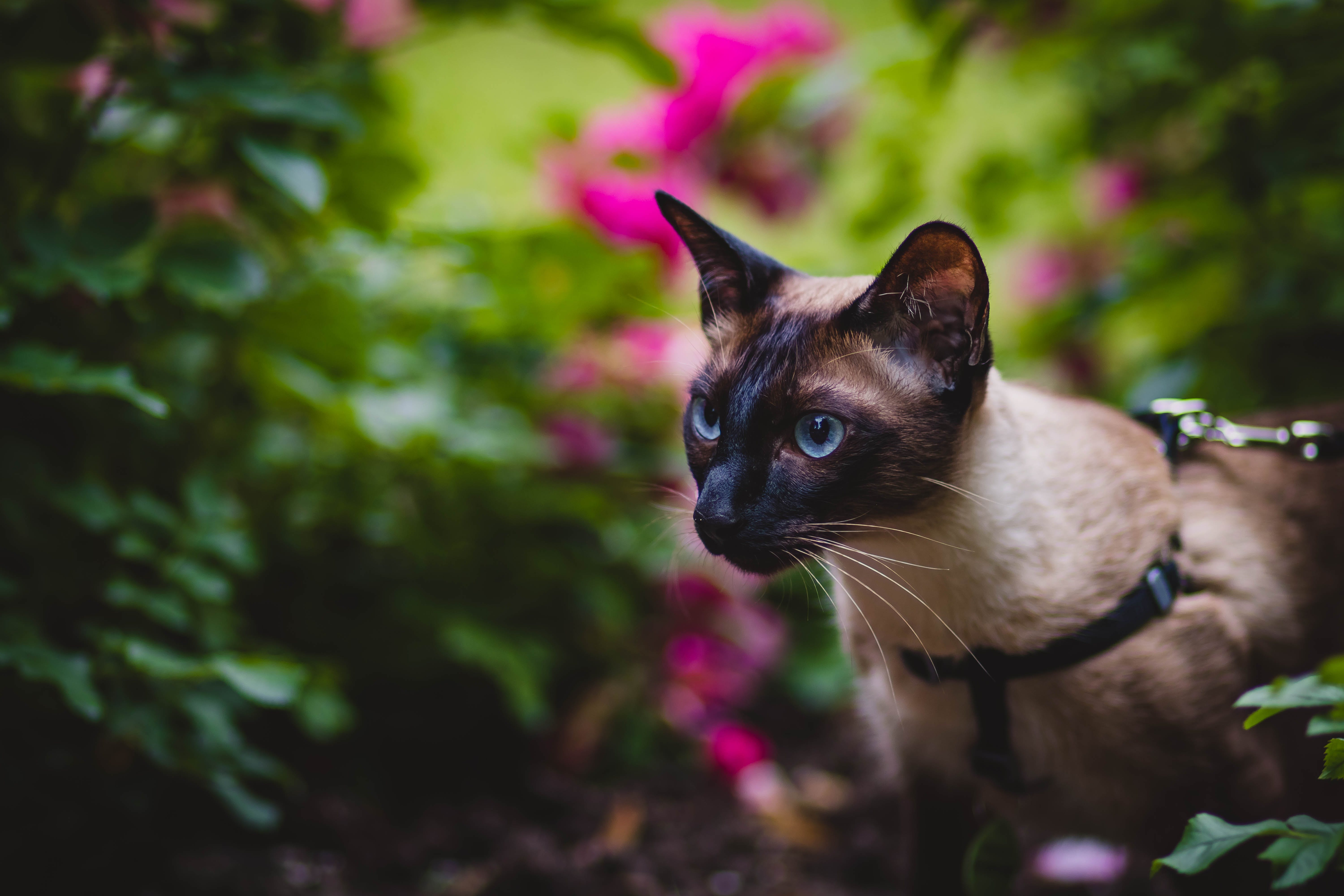 Black and Grey Cat in Selective Focus Photography
