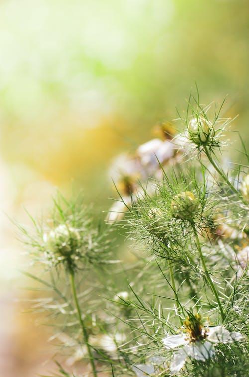 Kostenloses Stock Foto zu blühen, blumen, blütenblätter, blütenknospen