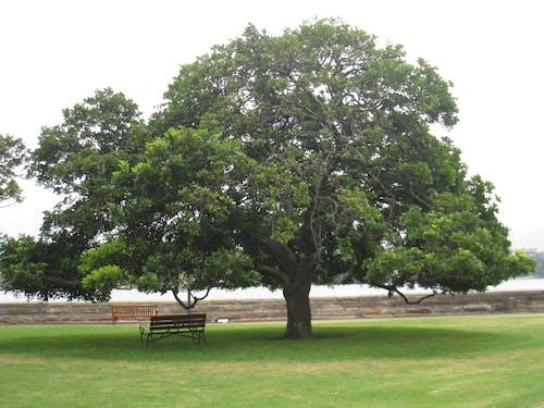 Fotos de stock gratuitas de naturaleza de sydney, plantas