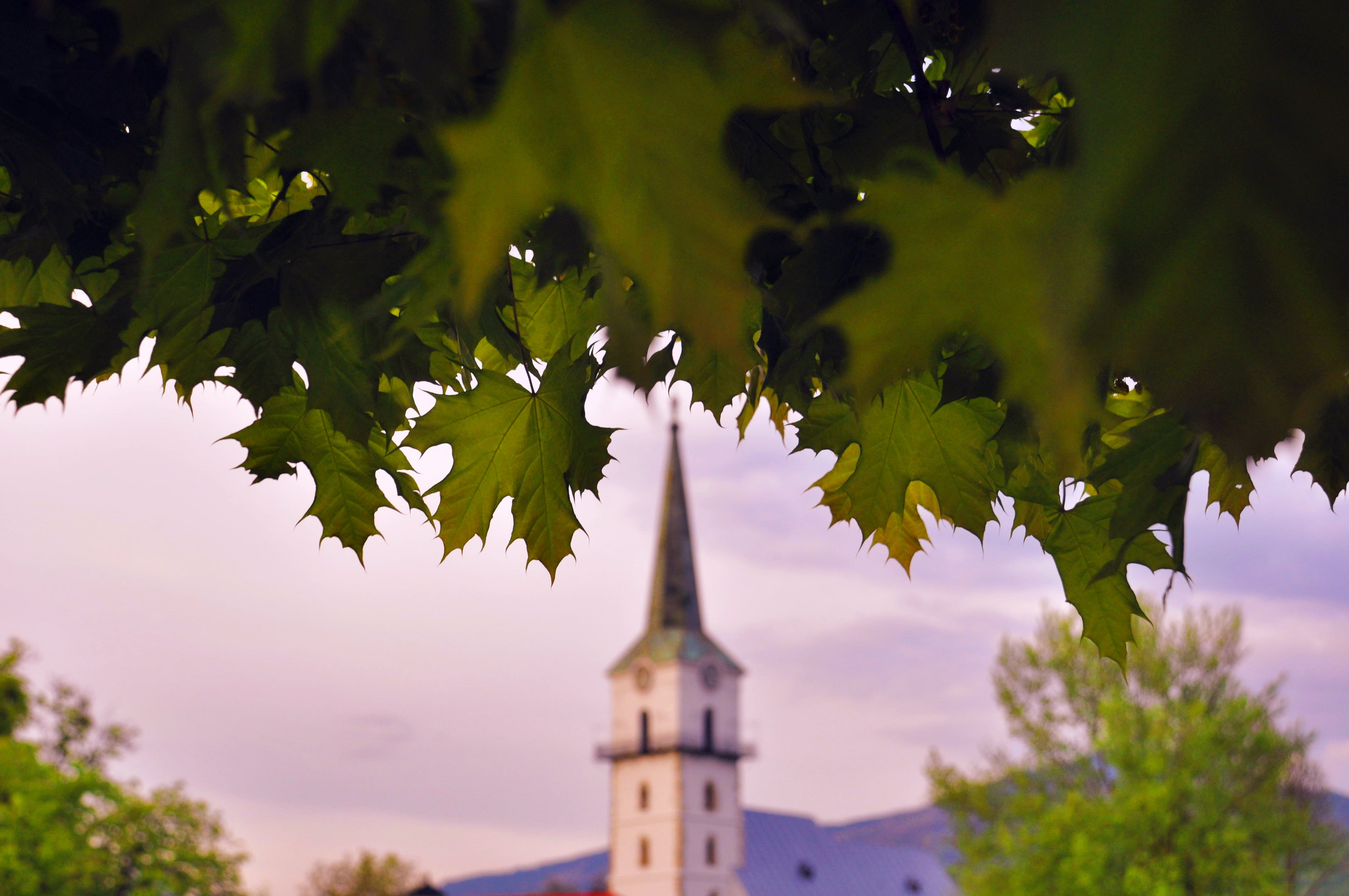 Tower Near Green Leafed Tree