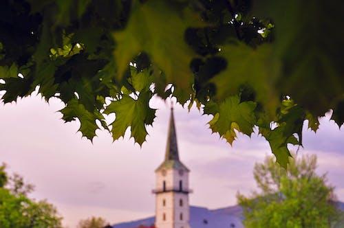 Бесплатное стоковое фото с архитектура, башня, деревья, дневной свет