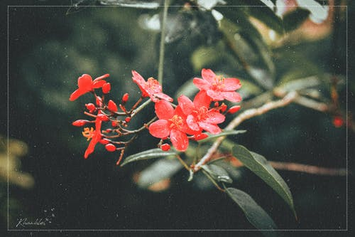 Free stock photo of artificial flowers, beautiful flowers, dalat, filmcolor