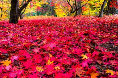 Gratis stockfoto met kleuren