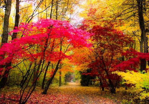 Gratis stockfoto met bomen, herfstkleuren, kleuren