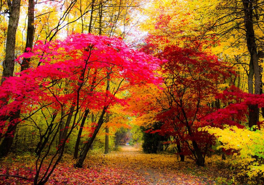 가을의 색, 나무, 색깔