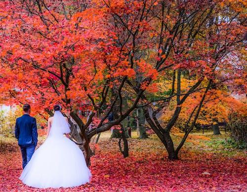Gratis stockfoto met bruiloft, huwelijk