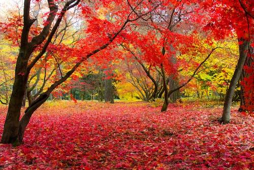 가을의 색, 나무, 색깔의 무료 스톡 사진