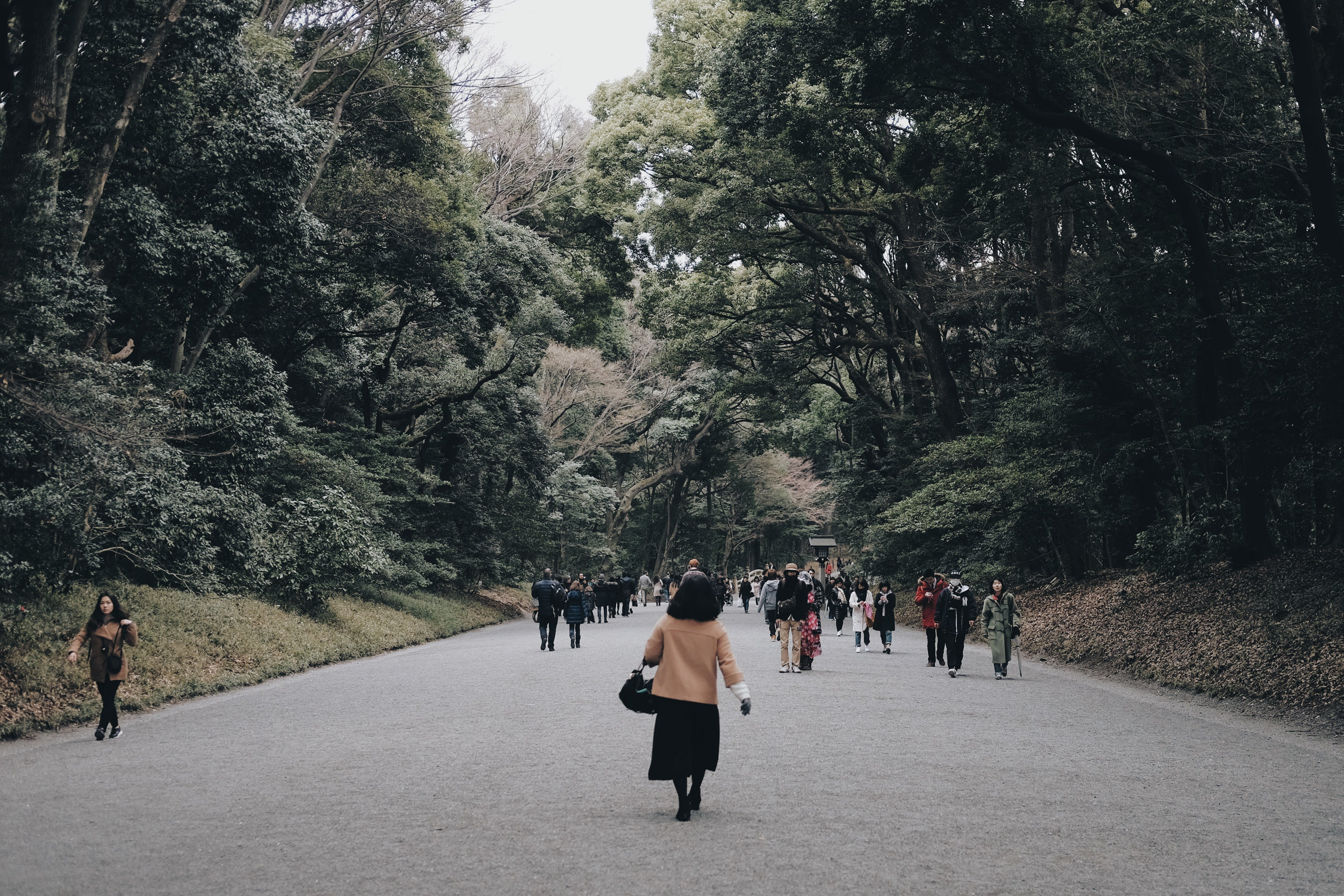 Free stock photo of asia, cold, cold weather, forest