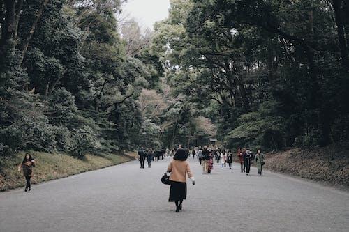 Photos gratuites de arbres, asie, couvert, forêt