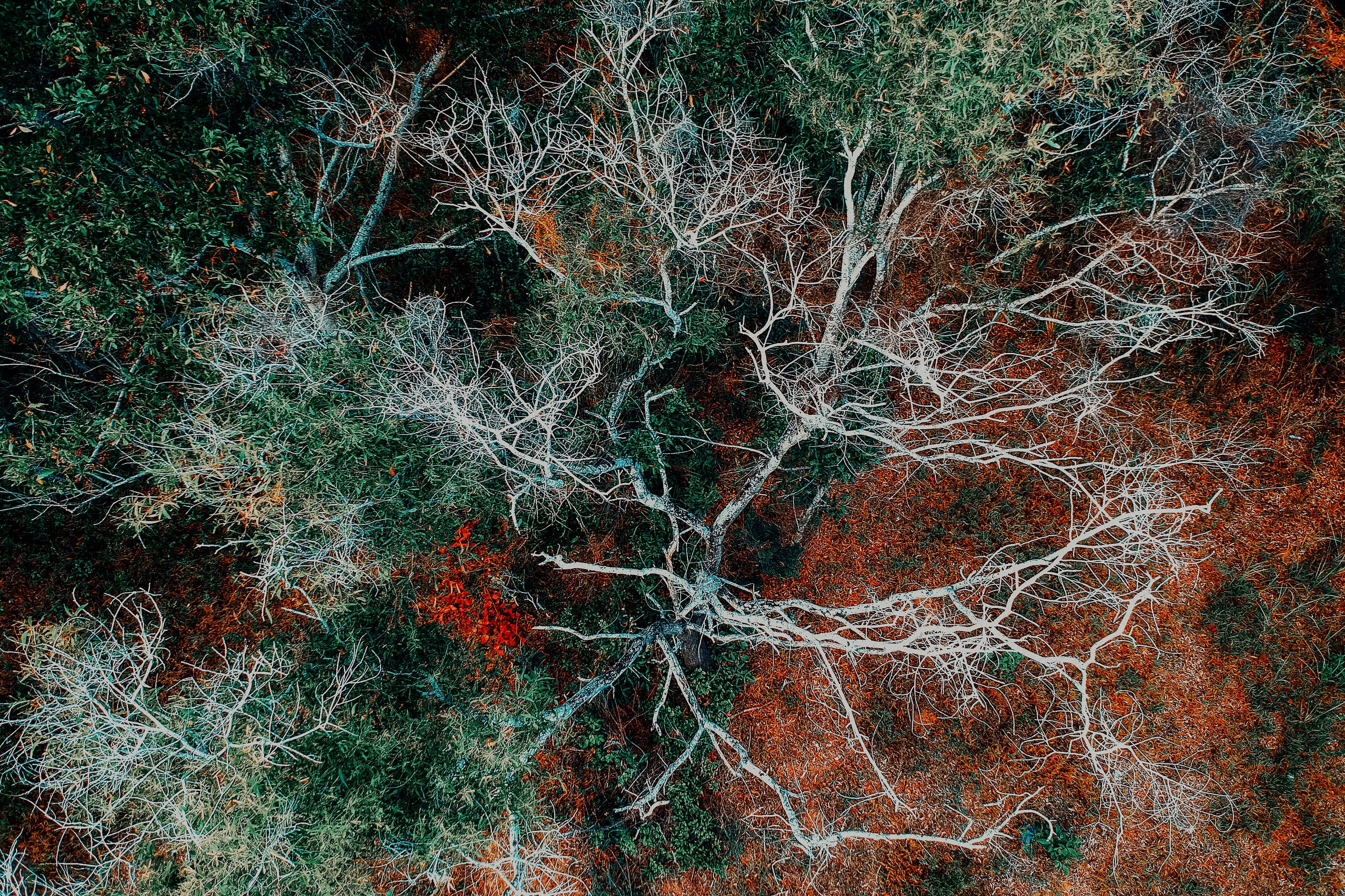 Aerial Photography of Green Leafed Tree