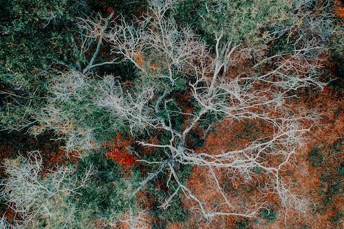 Immagine gratuita di alberi, ambiente, boschi, colore