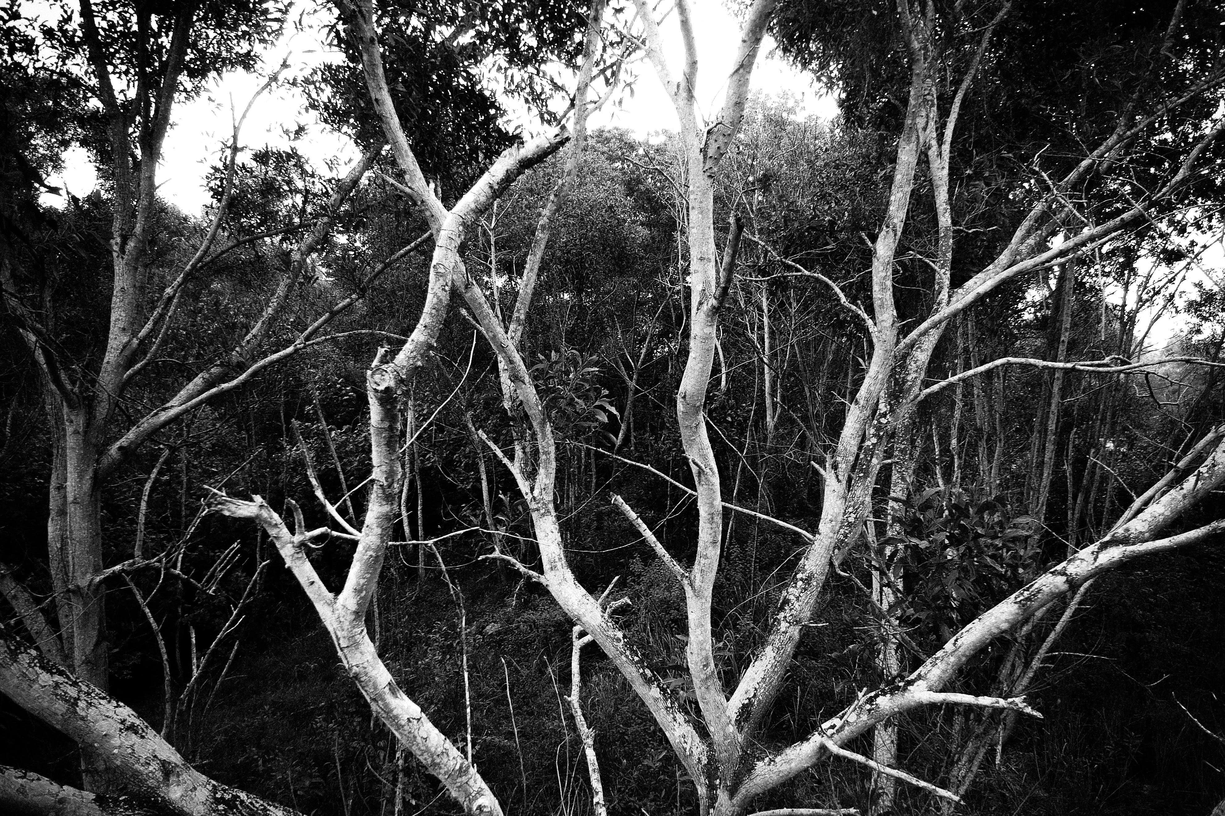 Kostenloses Stock Foto zu bäume, graustufen, hell, holz