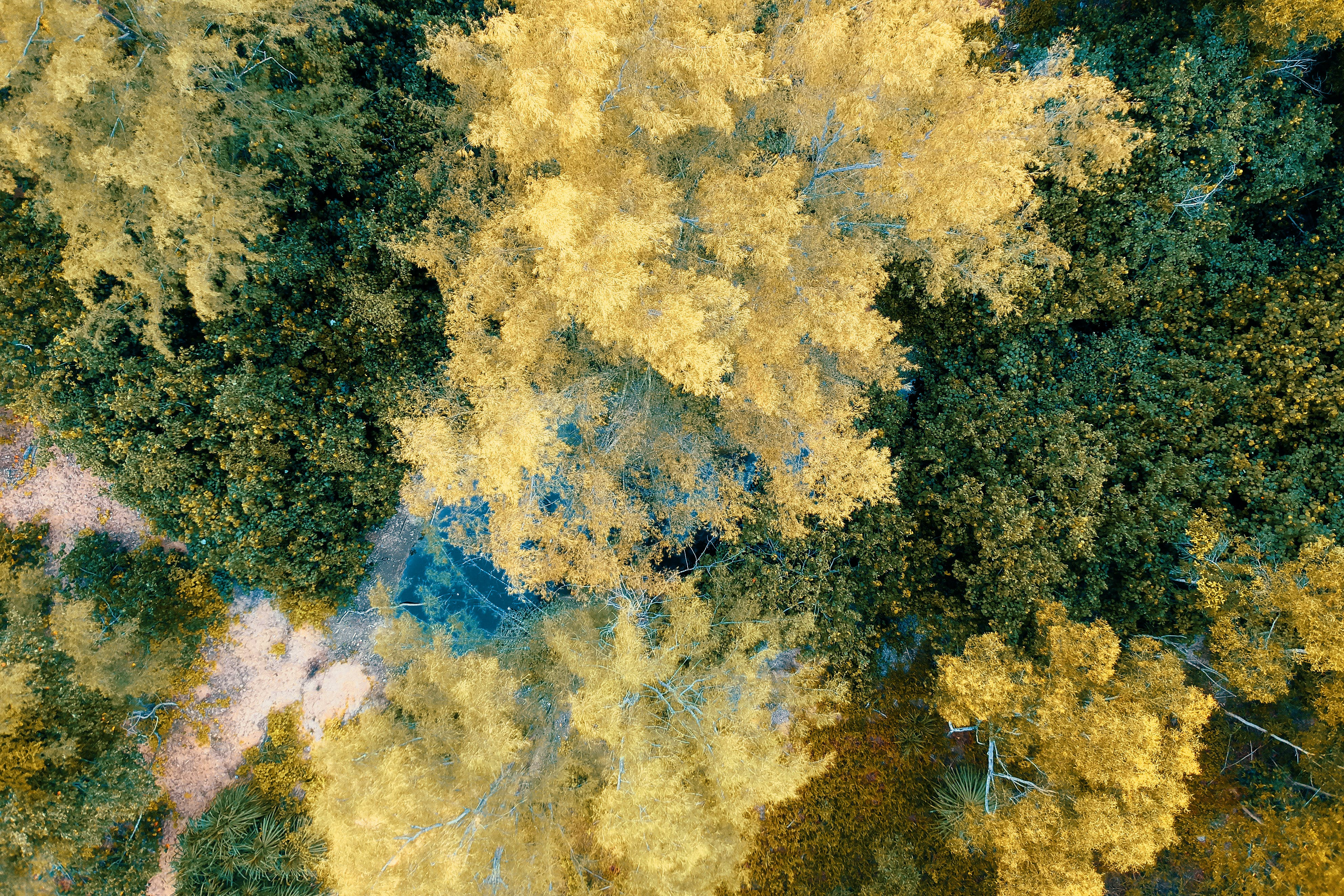 Top View Photo of Yellow and Green Leafed Trees