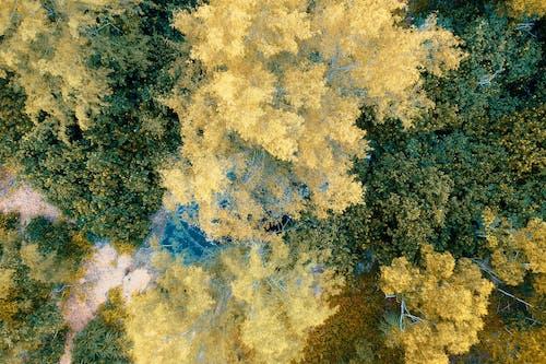 Photos gratuites de arbres, couleurs, jour, nature