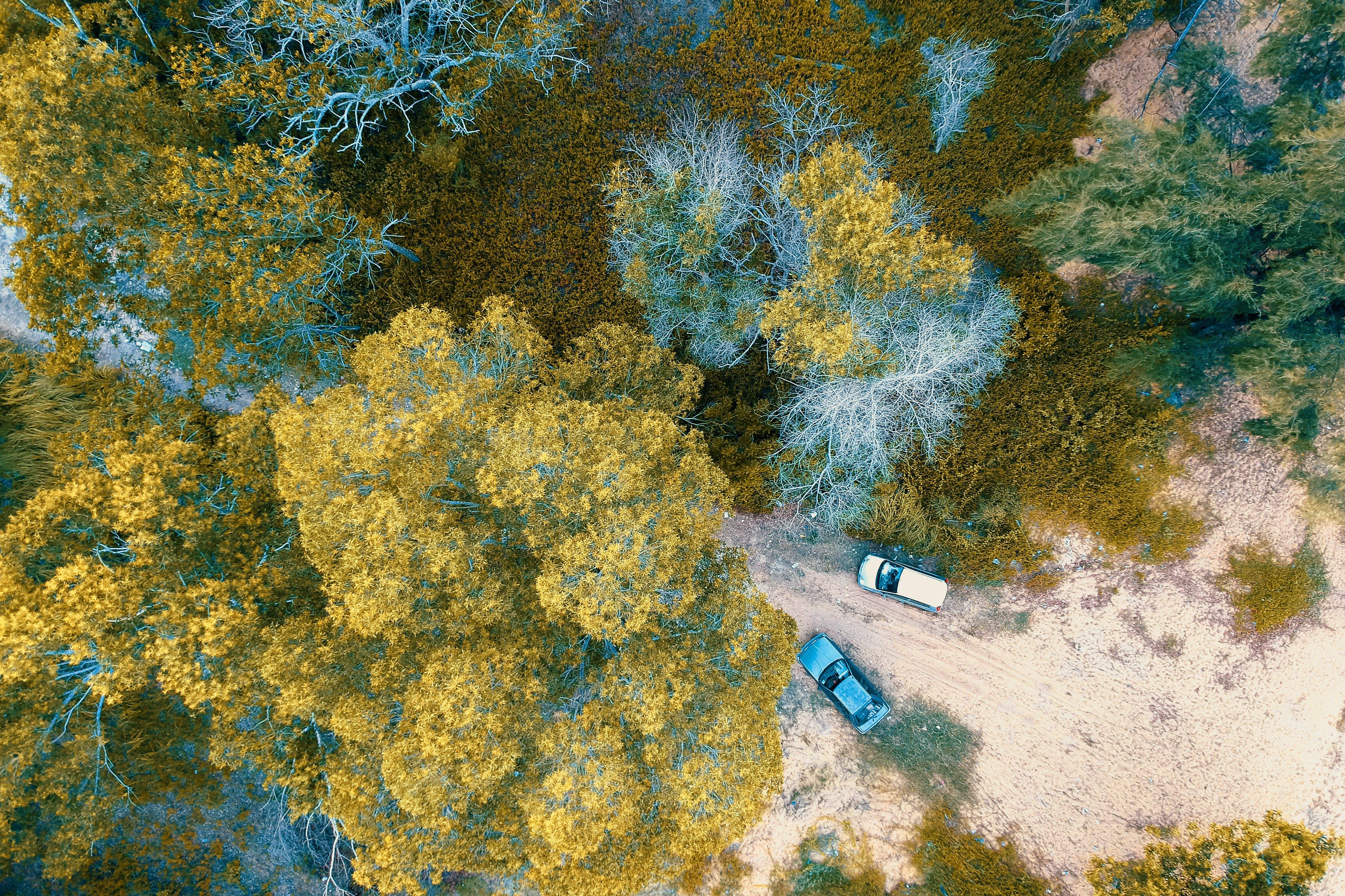 Бесплатное стоковое фото с автомобили, деревья, дневной свет, живописный