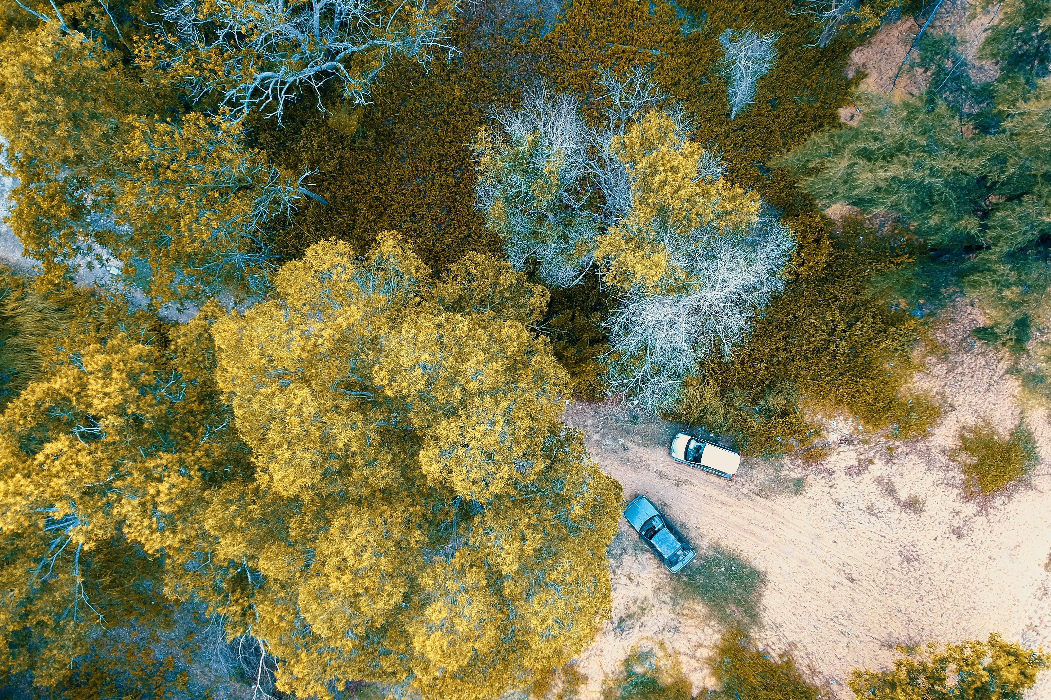 Aerial View Photography of Two Cars Surrounded by Trees