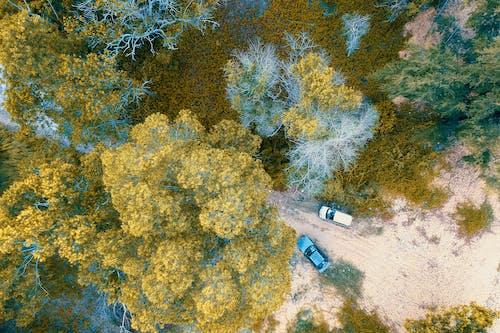 Gratis lagerfoto af biler, dagslys, farve, farverig