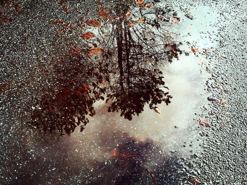 água, árvores, chão