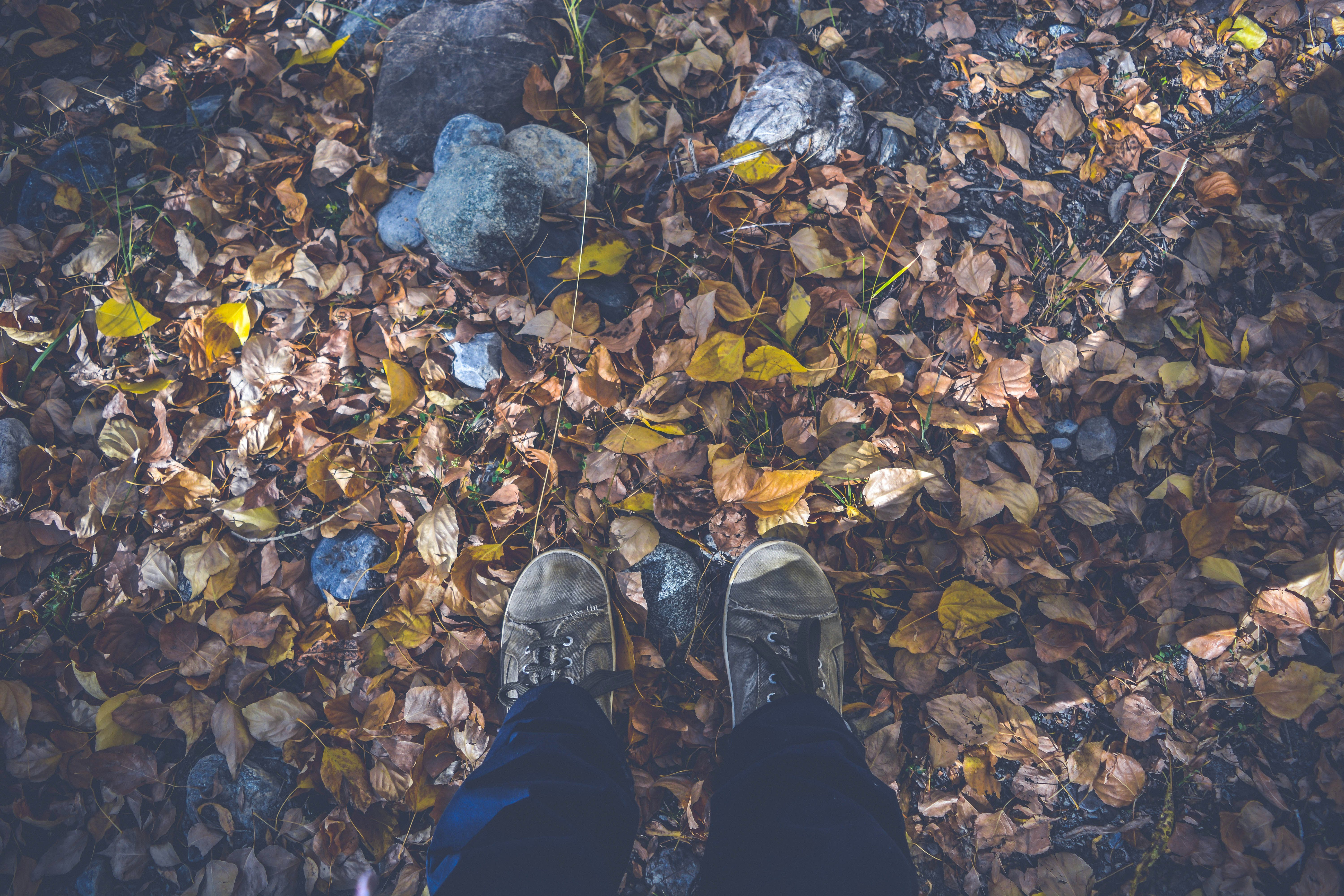 Person in Black Pants and Gray Low Top Shoes Stand on Dried Leaves and Rocks during Daytime