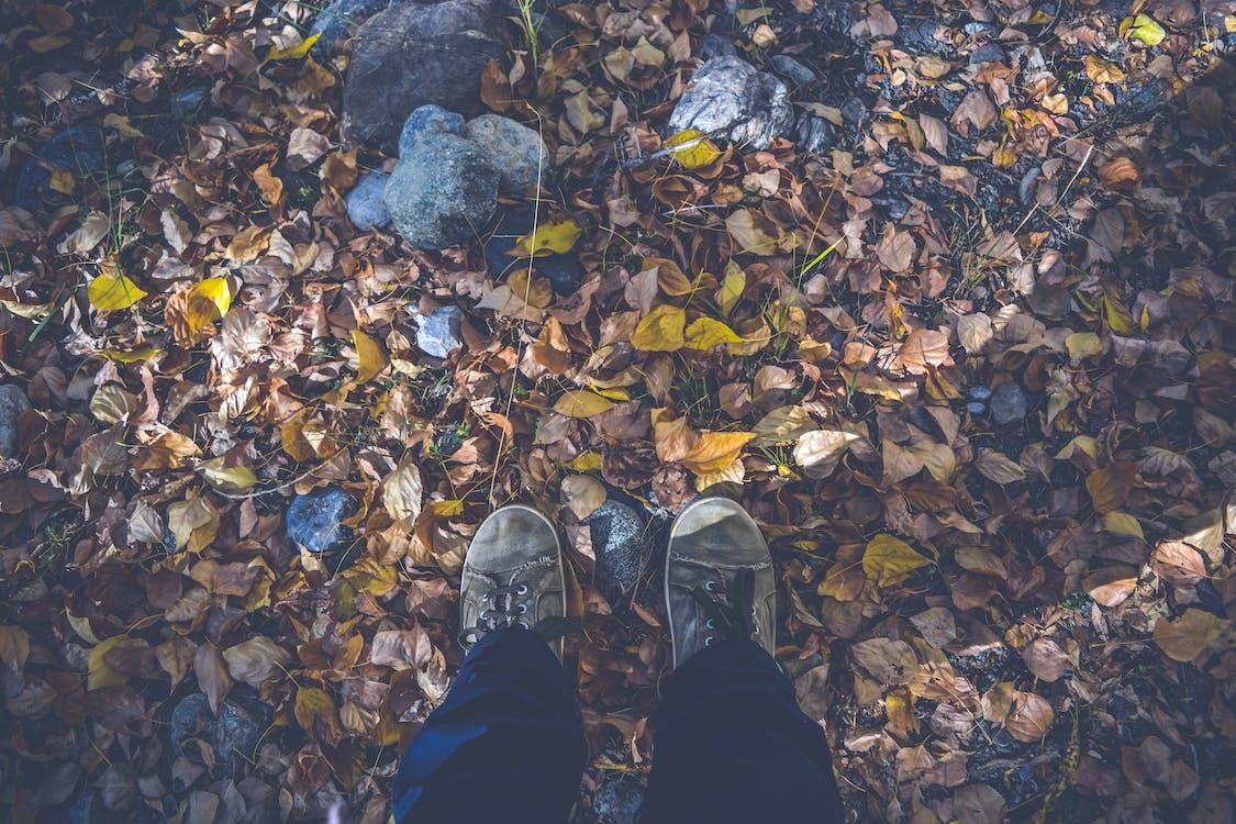 foglie secche, foresta, macinato