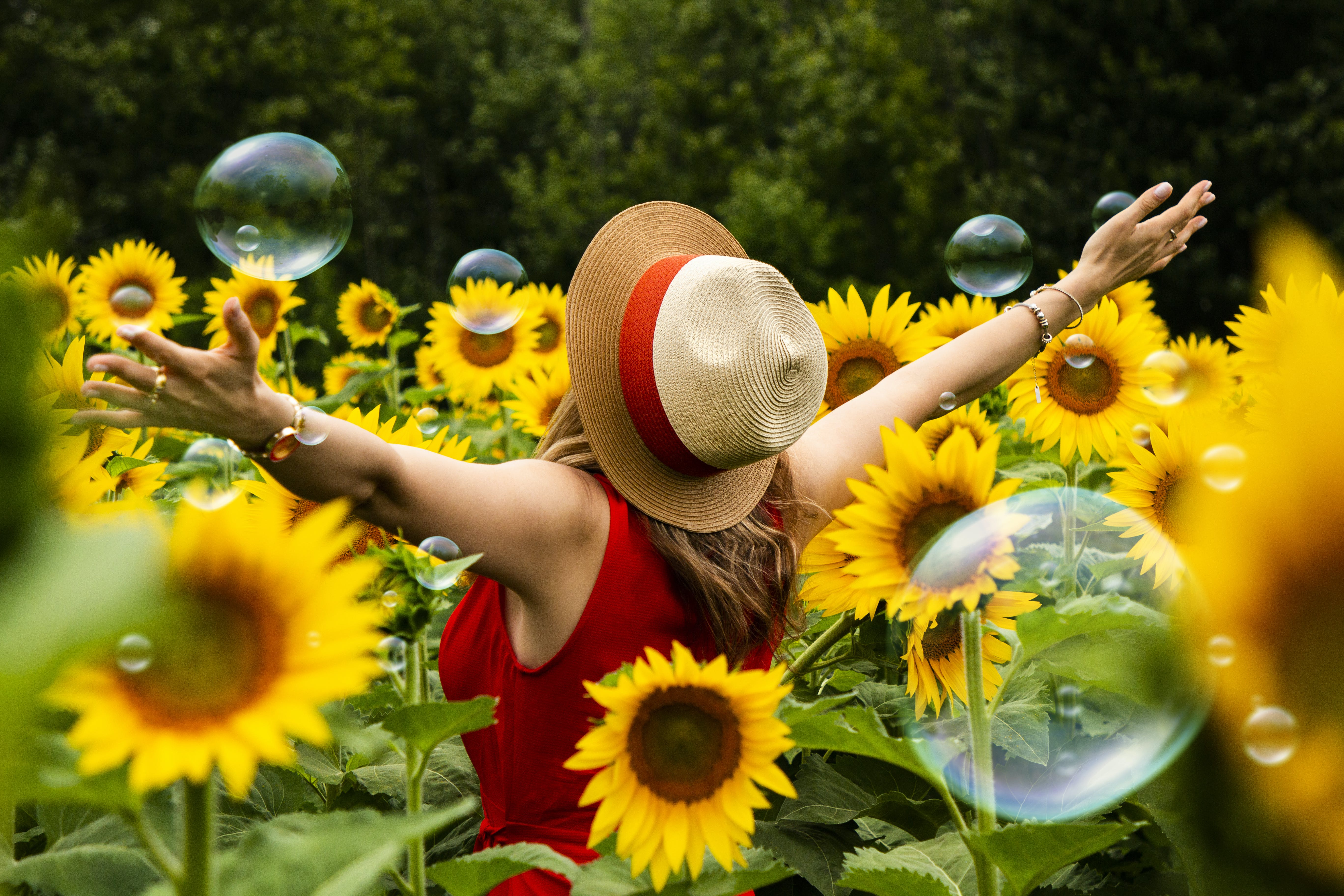 Woman Wearing Straw Hat Standing in Bed of Sunflowers