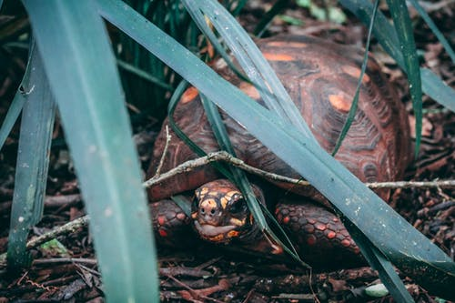 Close-Up Photography of Tortoise Near Leaves
