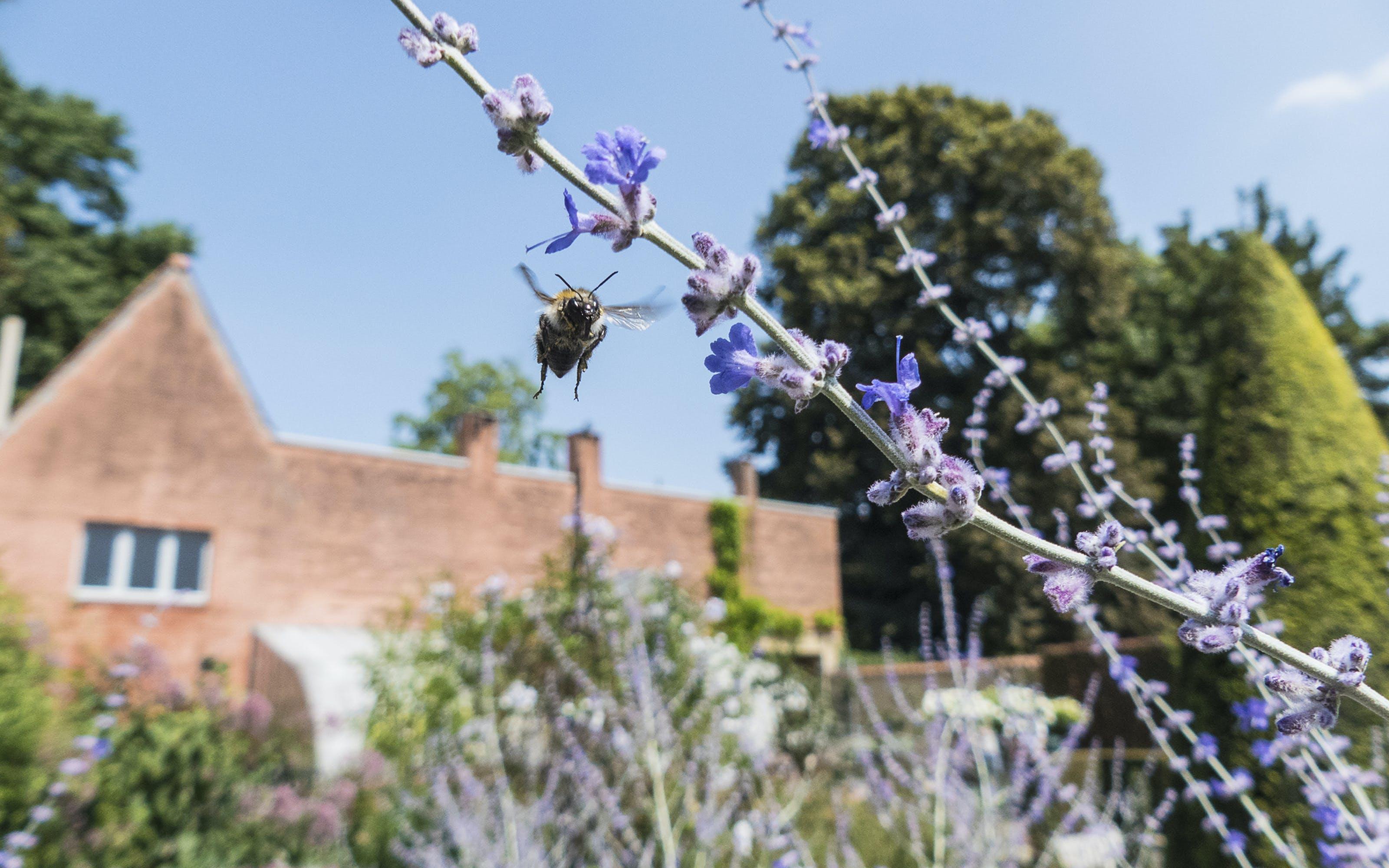 Δωρεάν στοκ φωτογραφιών με γαλάζιος ουρανός, μέλισσα, μοβ άνθη, πέταγμα
