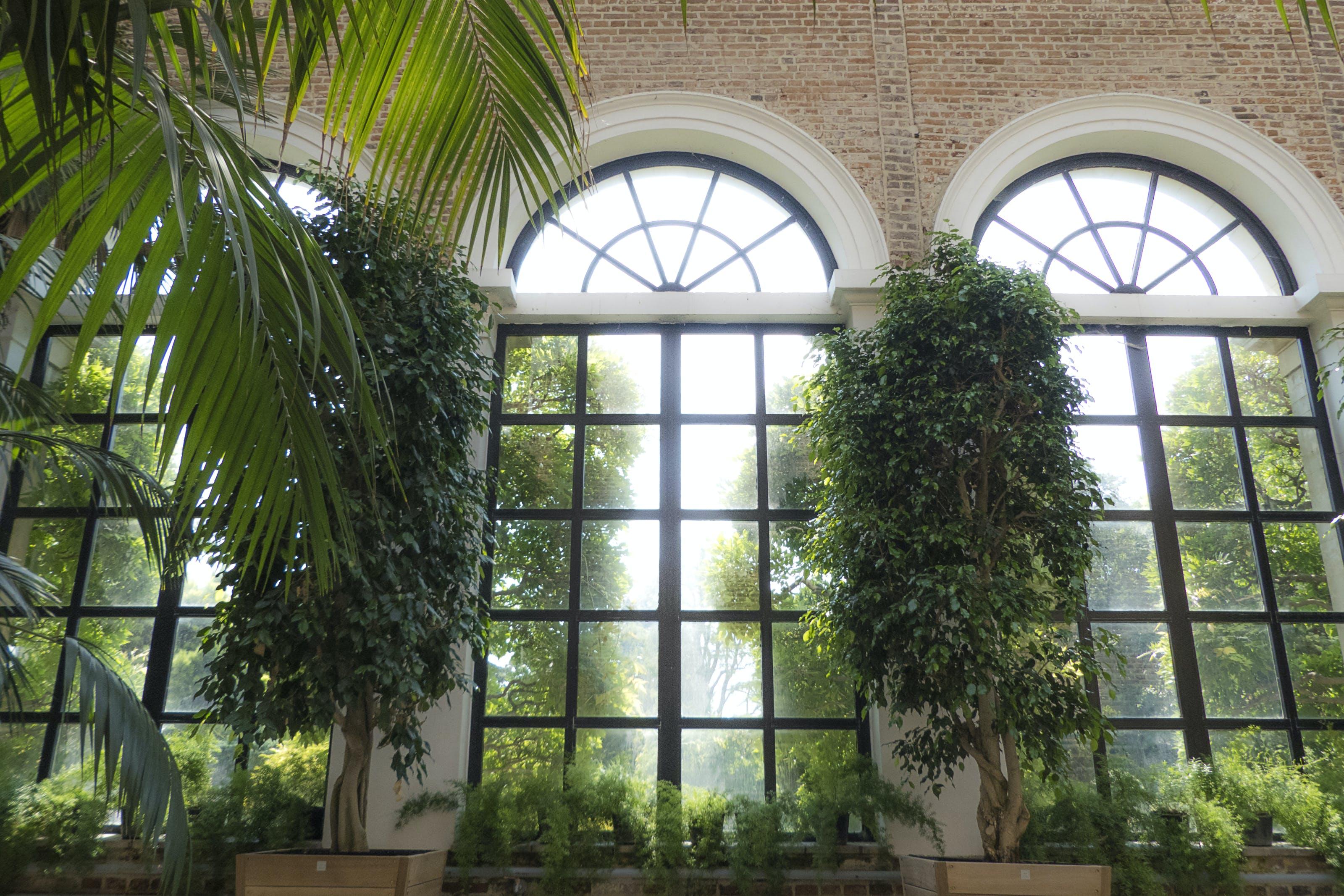 Gratis lagerfoto af buet vindue, mursten, mørkegrønne planter