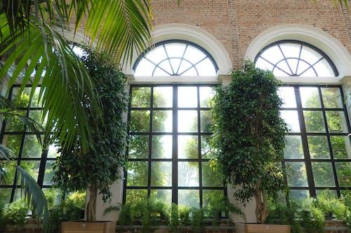 Základová fotografie zdarma na téma cihla, klenuté okno, tmavě zelené rostliny