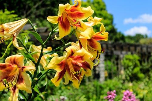 Immagine gratuita di fiori, fiori bellissimi, giallo, mazzo di fiori
