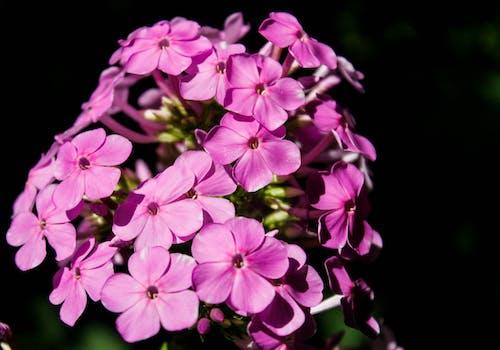 คลังภาพถ่ายฟรี ของ ช่อดอกไม้, ดอกไม้, ดอกไม้สวย, สีม่วง