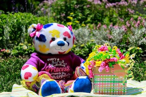 คลังภาพถ่ายฟรี ของ ดอกไม้, วันเกิด, สีน้ำเงิน, สีเขียว