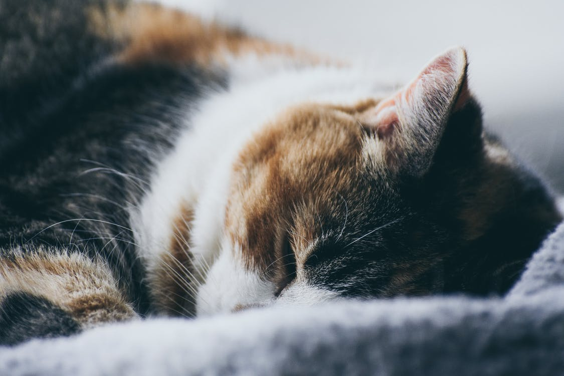 Close-Up Photography of Sleeping Cat