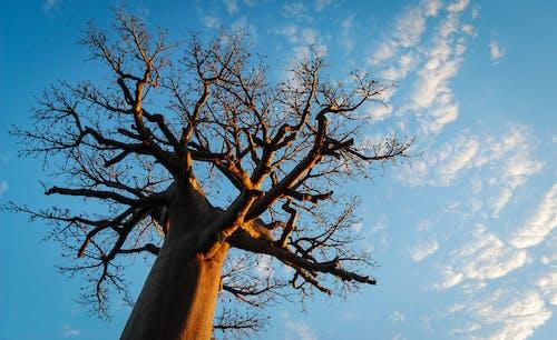 Kostnadsfri bild av landskap, natur