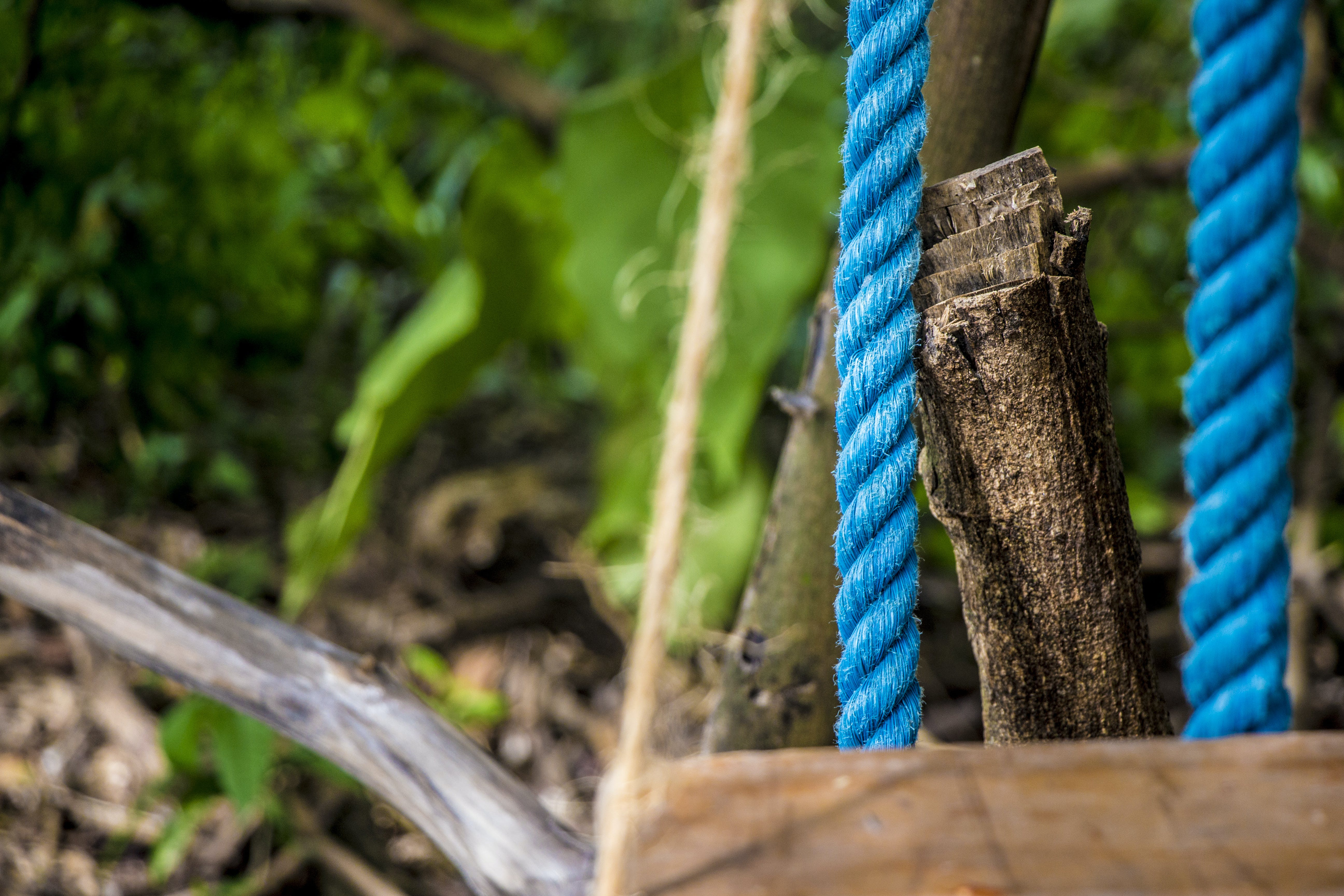 Free stock photo of field, blue, grass, rope