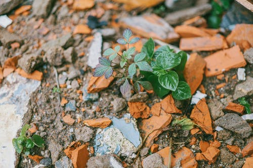 Green Leafed Plant Surrounded by Stones