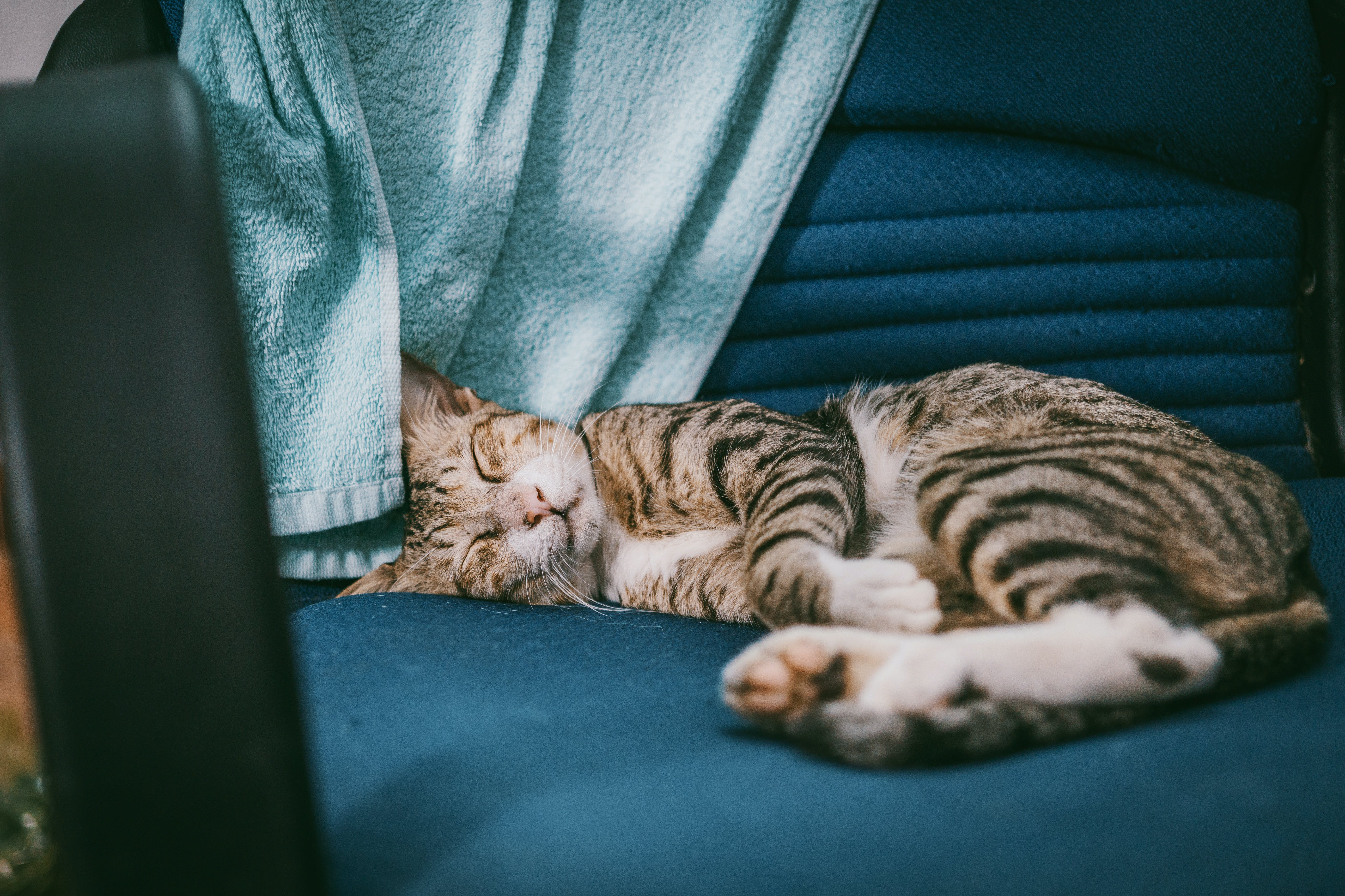 Silver Tabby Cat Lying on Teal Padded Chair