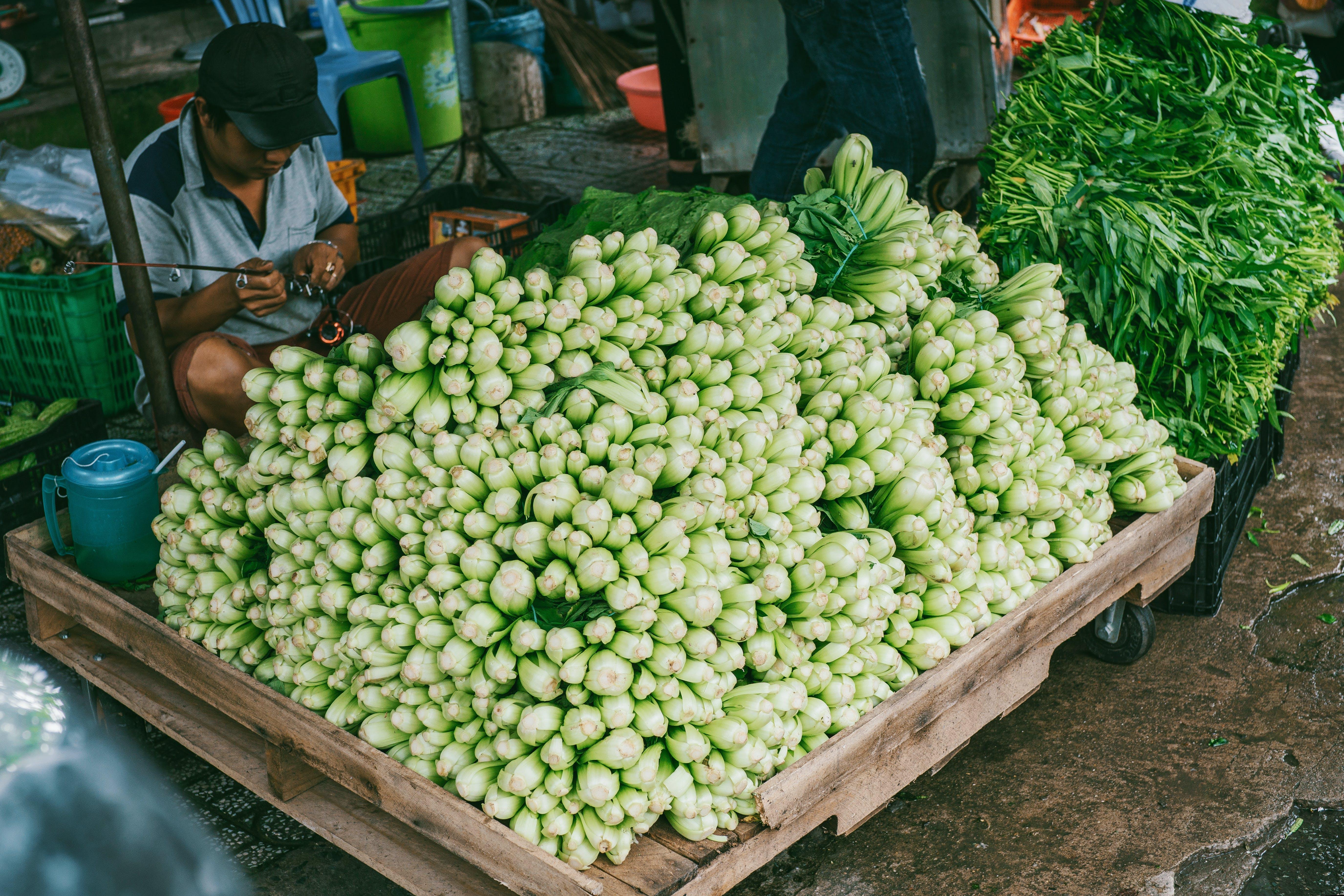 Foto profissional grátis de cultivo, estábulo, feira, homem