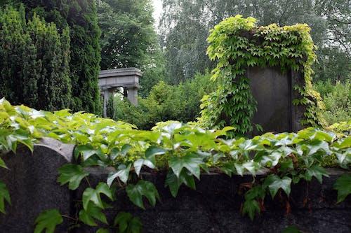 คลังภาพถ่ายฟรี ของ ต้นไม้, ปาร์ค, สวนเมือง, สีเขียว