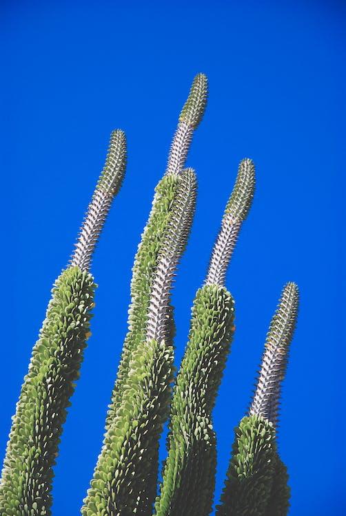 blauer himmel, blumen, botanisch