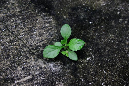 Foto profissional grátis de argamassa, ecológico, pequenas folhas, planta