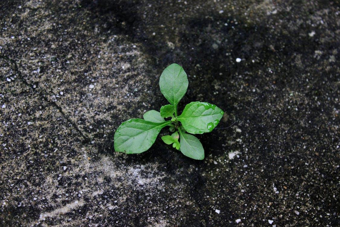 Foto stok gratis daun kecil, hijau, kehidupan